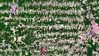 Google Earth offenbart das Ausmaß: Wie der Mensch die Erde zerstört
