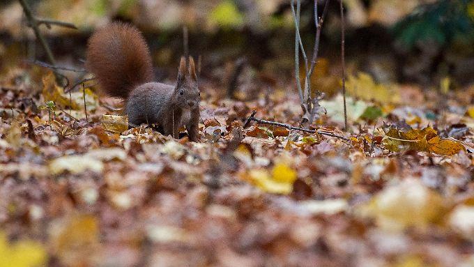 Der Herbst kommt. Zeit zum Einsammeln.