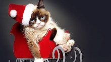 Vom Meme zum Megastar: Zornige Youtube-Katze macht Millionen