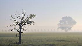 Weit geht der Blick in der Prignitz. Wenn er nicht vom Nebel gebremst wird.