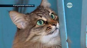 Die Katze Mascha auf Bildern des Senders REN TV.