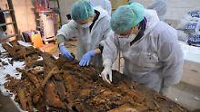 Sind das die Reste vom Sarg Cervantes'? Das sollen Untersuchungen nun zeigen.