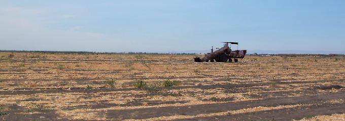 Eine Dauer-Dürre trocknet Kalifornien schon seit drei Jahren aus.