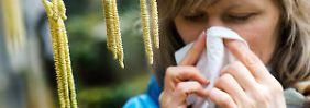 Leichte Entwarnung für Allergiker: Birkenpollen 2015 weniger aggressiv