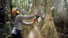 Die Waldzerstörung heizt den Klimawandel an und vernichtet Artenreichtum bei Pflanzen und Tieren.
