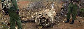 Lösung im Kampf gegen Wilderer: China könnte Elefanten und Nashörner retten