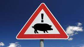 Achtung: Schweinegrippe!