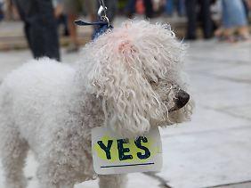 Demonstrierender Hund in Athen: Nicht alle wollen der Wahlempfehlung von Varoufakis folgen.