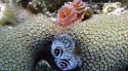 Schönheit unter Wasser: Korallen