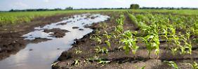 Mikroorganismen an der Arbeit: Flüsse setzen Tausende Tonnen Lachgas frei