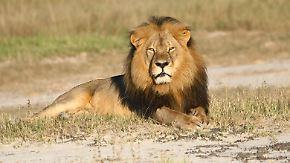 US-Zahnarzt spurlos verschwunden: Simbabwe will Löwenjäger zur Rechenschaft ziehen
