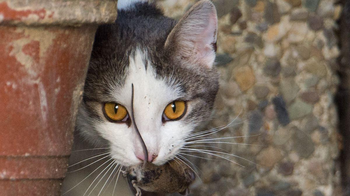 Frage Und Antwort Nr 401 Wieso Haben Katzen Vertikale