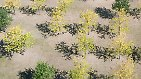 So trocken wie seit 50 Jahren nicht: Deutschland leidet unter Dürre