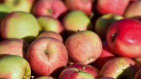 Miese Apfel- und Getreideernte: Hitze lässt Lebensmittelpreise in die Höhe klettern