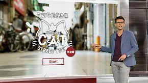 """n-tv Netzreporter: """"Cat Street View"""" zeigt Stadt durch die Augen einer Katze"""