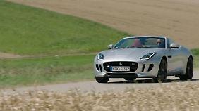 Gebändigte Raubkatze?: Jaguar F-Type jagt jetzt auch auf allen vieren