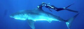 Meeresfreundin, Biologin und Model: Die Frau, die mit weißen Haien taucht