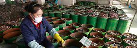 Studie zu Umweltgiften: Blei bedroht 26 Millionen Menschen
