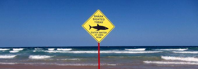 Vor Australiens Küsten gab es in diesem Jahr schon 31 Haiattacken.