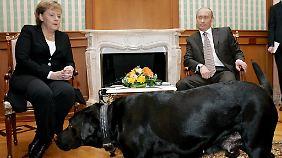 Bewusste Provokation? Merkel fühlte sich beim Treffen mit Putin und dessen Hund sichtlich unwohl.