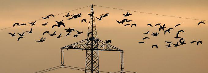 Naturschutz oder Energiewende? Hochspannungsleitungen gefährden seltene Vogelarten.