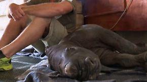 Seltener Nachwuchs in Südafrika: Erstmals seit 250 Jahren überleben Nashorn-Babys in Kapregion