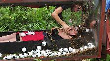 """Tag 11 im Dschungelcamp: """"Kasalla""""-Ausraster am Dschungelteich"""