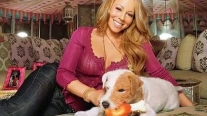 Kaum zu glauben, aber wahr: Mariah Carey lässt ihre Hunde erster Klasse einfliegen