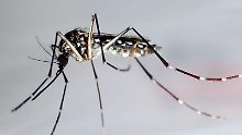 Das Zika-Virus unter dem Elektronenmikroskop. Foto: CDC/Cynthia Goldsmith/dpa