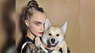 Promi-News des Tages: Hund von Cara Delevingne pinkelt auf Chanel-Catwalk