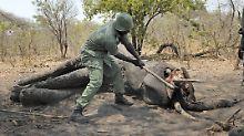Tierschützer in Tansania getötet: Wilderer schossen wohl Helikopter ab