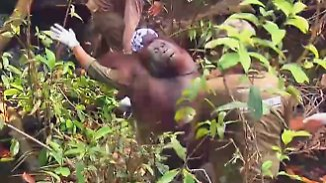 Brandrodungen in Indonesien: Tierschützer retten Orang-Utans vor dem Hungertod