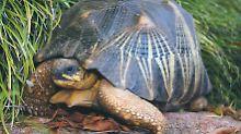 Endlich wieder in Sicherheit: Gestohlene Schildkröte kehrt in Zoo zurück