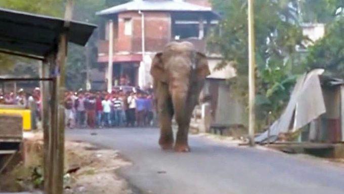 Kaum zu glauben, aber wahr: Wilder Elefant zerlegt indisches Dorf