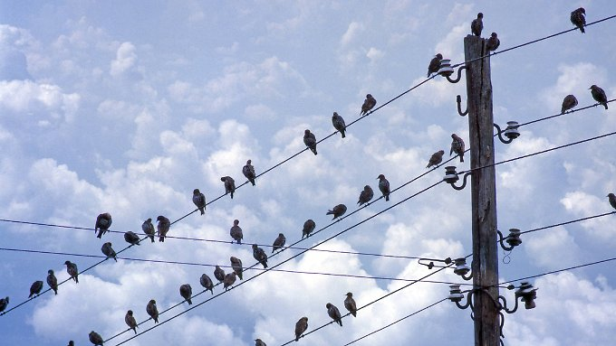 Auswirkung auf die Vogelwelt: Bei Wandervögeln sind Verschiebungen der Flugperioden zu beobachten.
