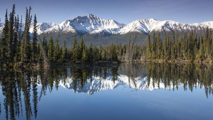 Rund um den Yukon River gibt es eine einzigartige Natur.