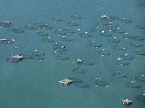 Fischreusen im Meer vor den Philippinen.