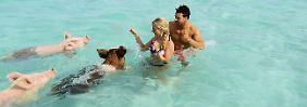Entspanntes Schweineschwimmen: Leonie und Leonard