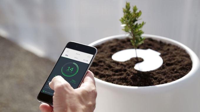 Per App wird das Wachstum der Pflanzen kontrolliert.