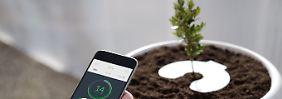 Bios Incube mit Smartphone-App: Bio-Urne macht Asche zu Pflanzen