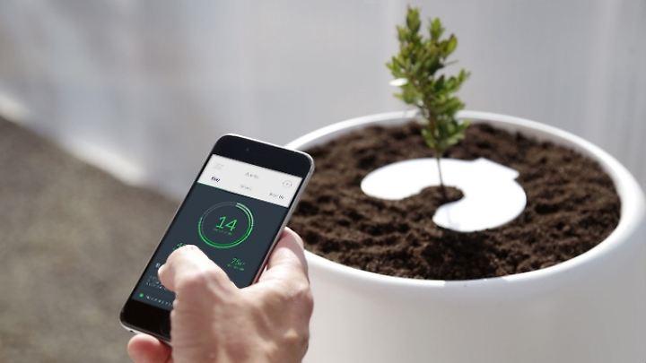 bios incube mit smartphone app bio urne macht asche zu pflanzen n. Black Bedroom Furniture Sets. Home Design Ideas