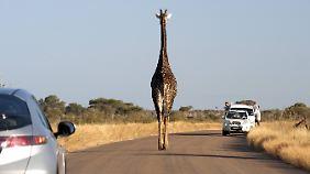 Auf dem Gehweg kommt dann und wann auch eine Giraffe vorbei.