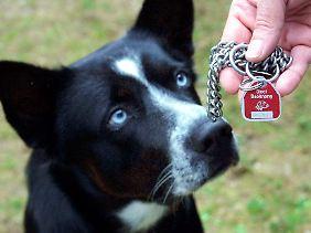 Städte und Gemeinden können willkürlich die Hundesteuer festlegen.