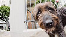 Muss Toby ausziehen?: Richter besichtigt Hundespuren
