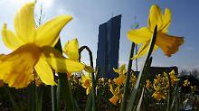 Deutschland profitiert von Draghi: Führende Ökonomen loben die EZB
