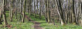"""Ruhe, Natur und Dorfidylle: Mein """"Anti-Stress-Wandern"""" im Sauerland"""
