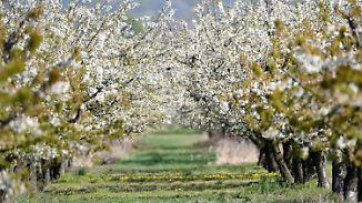Nordwesten im Wetter-Pech: April endet mit Rückkehr des Frühlings