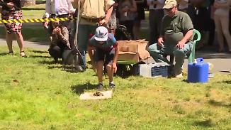 Verrückter Wettbewerb in Kalifornien: Wessen Frosch springt am weitesten?