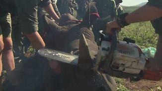 Vietnams Kampf gegen Wilderer: Ärzte verstümmeln Nashörner mit Kettensäge