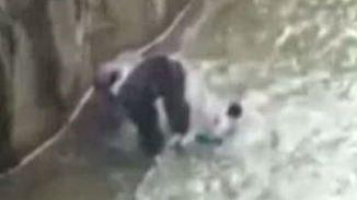 Zoowärter vor schwerer Entscheidung: Kleinkind gerät in die Fänge eines 180-Kilo-Gorillas